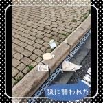 image_38.jpeg